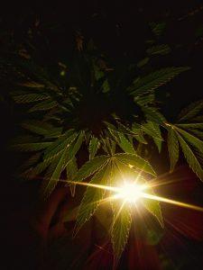 legal cannabis, $75 billion, legal weed, weedupdate, weed update, recreational marijuana, medical marijuana, medical cannabis, federal government, state by state